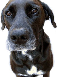 Dierenmissies - Honden ter Adoptie
