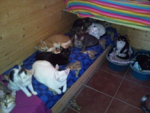 kattenopvang