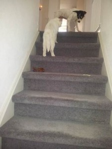 Sally boven aan de trap