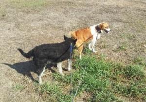 Franky en Daisy
