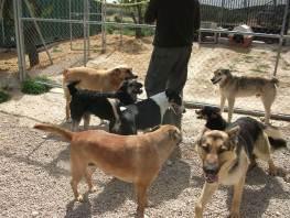 Honden in Tobarra