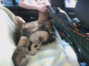 Puppies bij elkaar