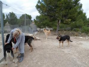 Inspectie van de hondjes