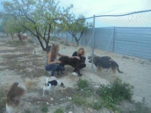 Gauw de Betum, Tycho en Jacky eruit laten en kennis laten maken met de hondjes uit het asiel