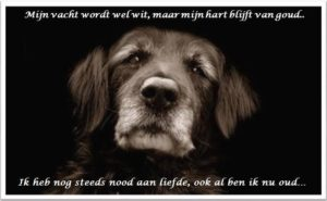 oudehond